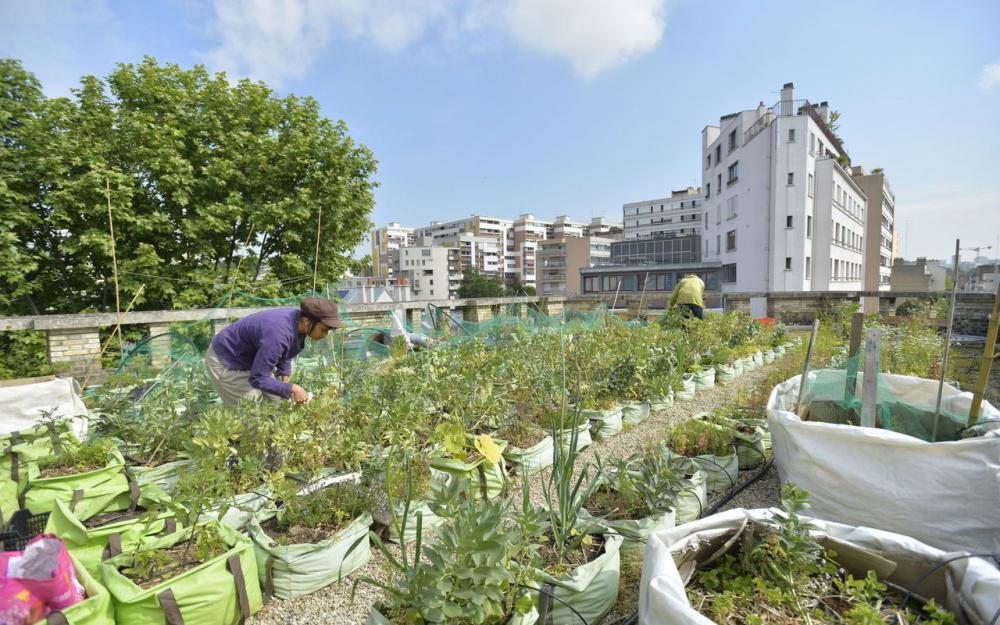 L'agriculture urbaine à la rescousse des villes