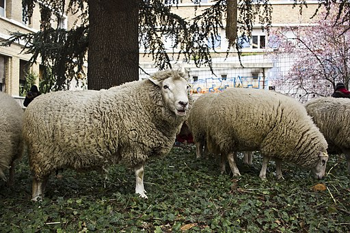 L'agriculture urbaine au Mans